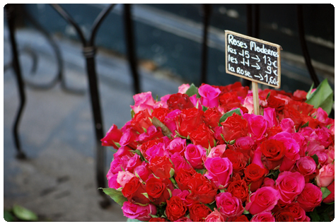Roses_Sacasa1